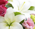Interflora.co.uk : Gift Flowers to Your Friends via Interflora